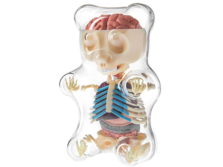 Gummi Bear Anatomy Kit - OMG Gimme!